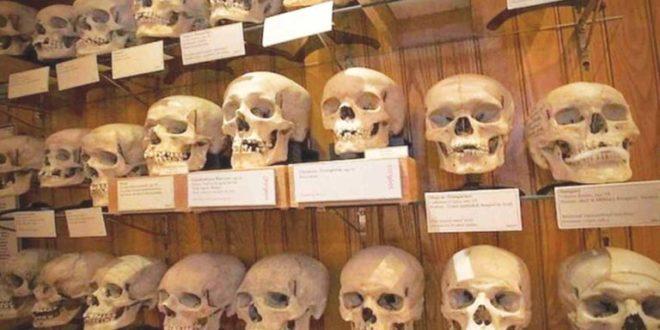 L'INCROYABLE HISTOIRE DES CRÂNES ALGÉRIENS DU MUSÉE DE L'HOMME